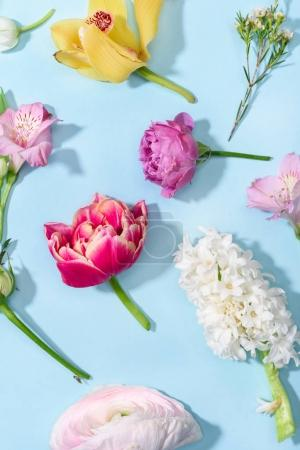 Photo for Top view of beautiful blooming flowers collection isolated on blue - Royalty Free Image