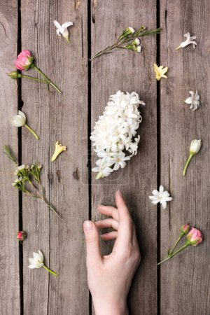 Flowers and human hand