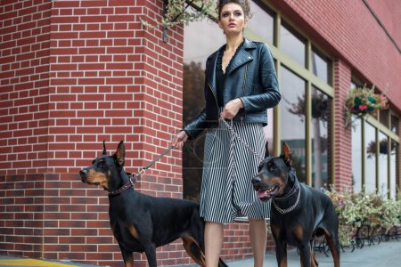 Photo for A girl walks along the street in the city along the building with two Dobermans on a leash. She and the dogs cross the road. - Royalty Free Image