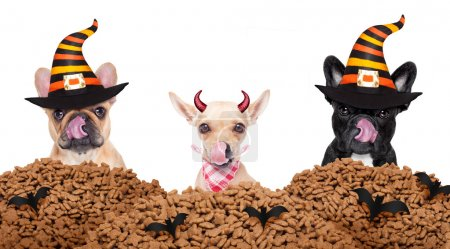 halloween  devil dogs hungry for food