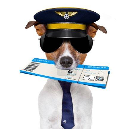 Photo pour Jack russell airline pilot ou hôtesse chien, avec check-in d'embarquement billet de passage en bouche, isolé sur fond blanc - image libre de droit
