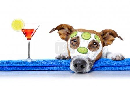Photo pour Jack russell chien détente avec masque de beauté au centre de bien-être spa, hydratante, masque crème et concombre, isolé sur fond blanc, avec boisson cocktail - image libre de droit