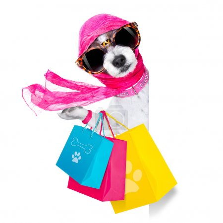 shopping chien diva