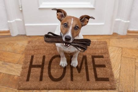 Hund wartet auf Gassi gehen mit Leine