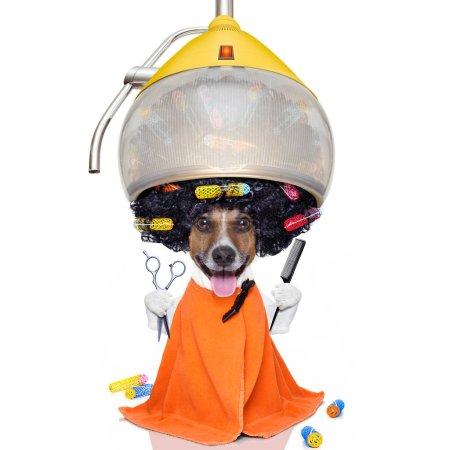 Photo pour Afro look chien avec de très gros cheveux noirs bouclés, ou perruque portant une serviette de coiffeur orange, isolé sur fond blanc - image libre de droit