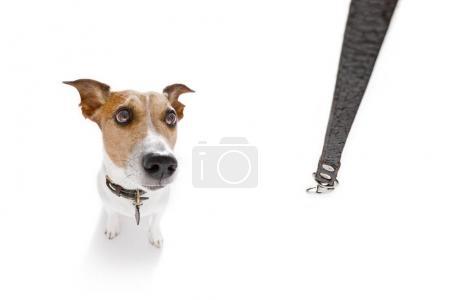 Photo pour Chien en attente pour le propriétaire de jouer et aller pour une promenade avec laisse, vue grand angle fisheye - image libre de droit