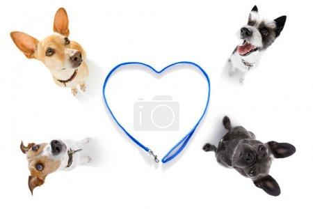 Photo pour Couple de chiens en attente pour le propriétaire de jouer et aller pour une promenade avec laisse, vue grand angle fisheye - image libre de droit
