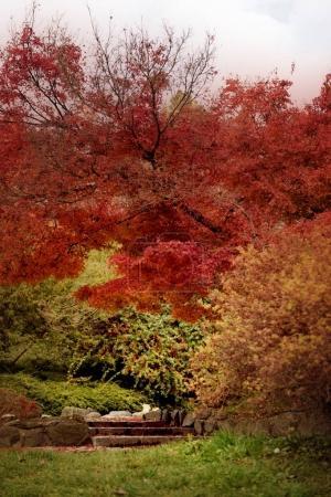 beautiful trees in  Autumn  park. Nature