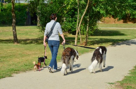 Photo for A woman is walking different breeds of dogs simultaneously in a park - Royalty Free Image