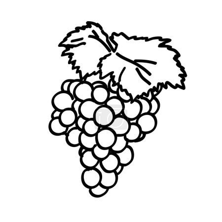 Hand drawn grape bunch with leaves