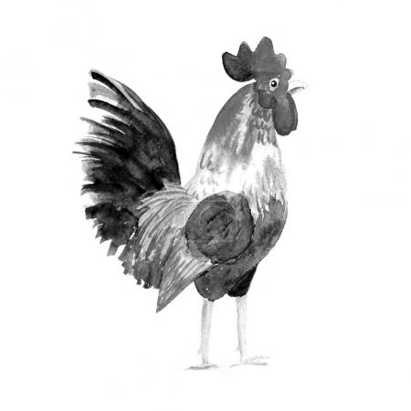 Rooster symbol 2017. Watercolor print .