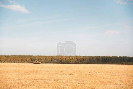 Combine harvester in the field