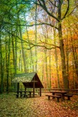 Wonderful autumn in the forest in Europe