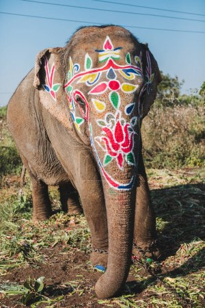Indian male elephant  standing for parade on festival in Ernakulam temple for the traditional ceremony Kerala, India.