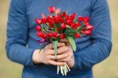 Flowers lazoriki. Bouquet of Red tulips in the hands of the men in blue clothing.