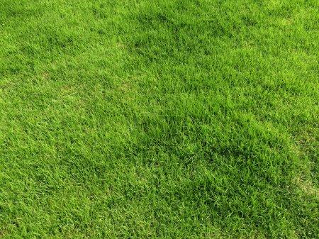 Photo pour Texture d'herbe verte pour le fond. - image libre de droit