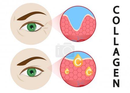 Illustration pour ADN protéger la solution de collagène. Traitement vectoriel des soins de la peau. Rose essence goutte - image libre de droit