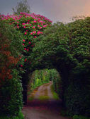 tunnel from bushes and flowers at sunset