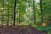 Landscape of forest - Germany