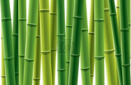 Row of bamboo trees