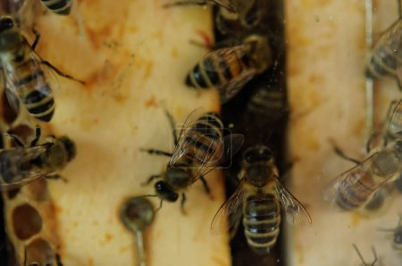 bees sitting in hive