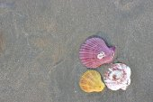 Top view of colorful shells on dark sandy on the tropical beach for background.