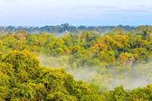 Morning fog over the brazilian rainforest in Brazil