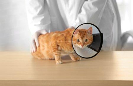 Veterinarian doctor with cat