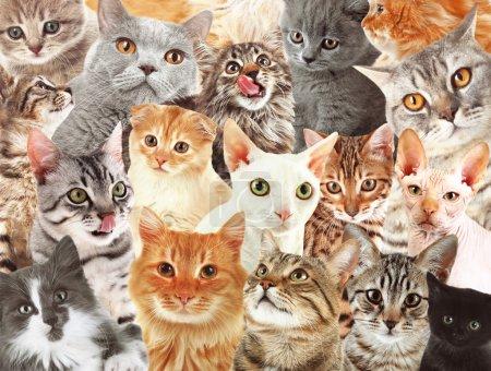 Many cats background