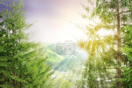 Photo pour Forêt collines verdoyantes dans les montagnes avec des rayons de soleil - image libre de droit