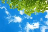 """Постер, картина, фотообои """"Ветви деревьев с зелеными листьями на фоне неба"""""""