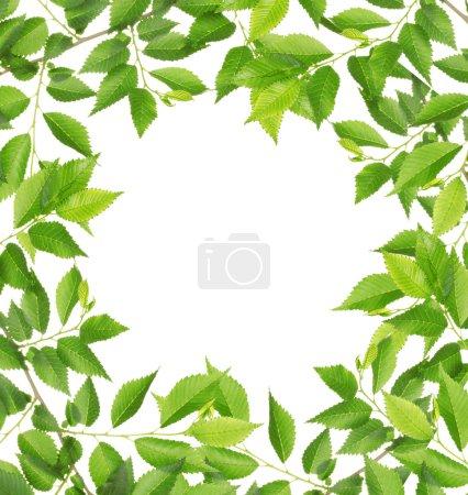 Green foliage frame