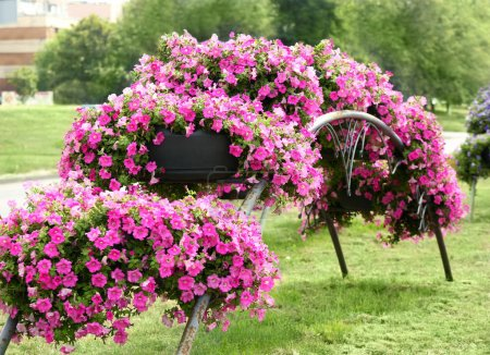 Beautiful arch made of flowerbeds...