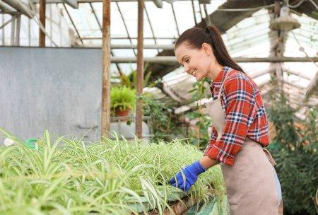 Pretty gardener in greenhouse