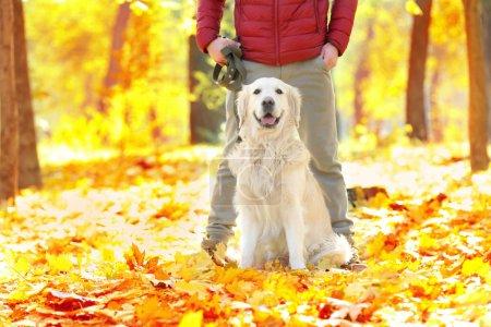 Funny labrador retriever