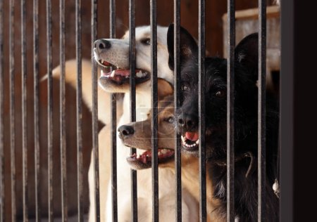 Homeless dogs in cage