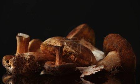 Fresh mushrooms on black background