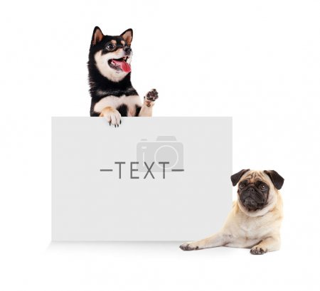 Cute dogs with blank card