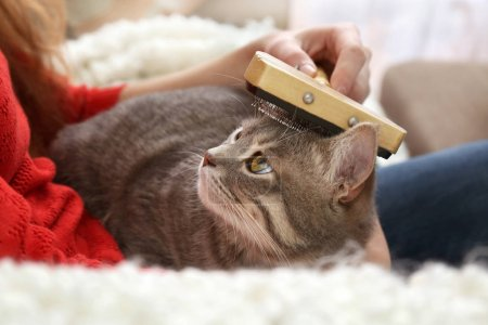 Woman combing cute cat with brush