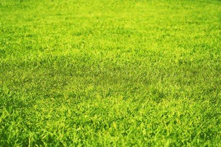 Photo pour Vert herbe texture fond - image libre de droit
