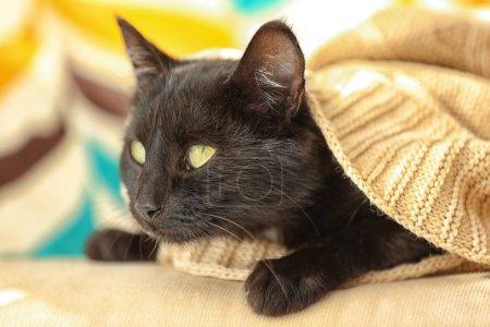 Photo pour Joli chat noir allongé sous le plaid beige à la maison, bouchent avec vue - image libre de droit
