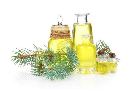 coniferous essential oil