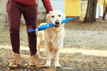 Man and funny labrador retriever