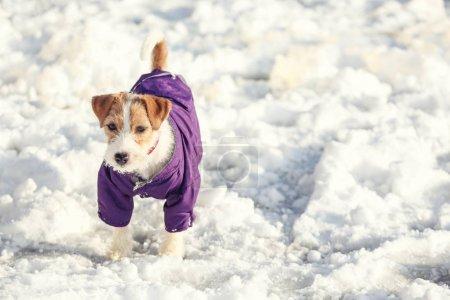 Cute funny dog