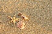 Starfish and shells on sea coast
