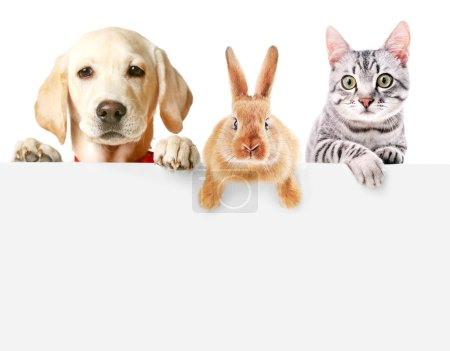 Cute friendly pets on white background...