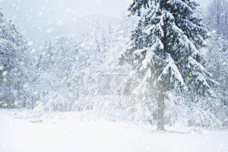 Photo pour Beau paysage hivernal pendant la tempête de neige - image libre de droit