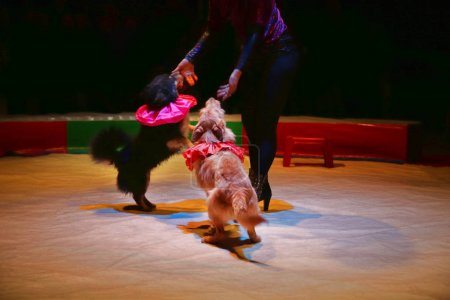 Dogs act in circus