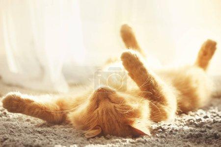 cat sleeping on carpet