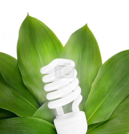 Light bulb on green leaves...